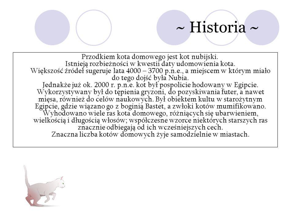~ Historia ~ Przodkiem kota domowego jest kot nubijski. Istnieją rozbieżności w kwestii daty udomowienia kota. Większość źródeł sugeruje lata 4000 – 3