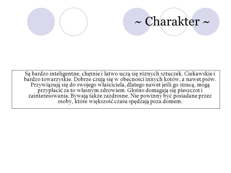 ~ Charakter ~ Są bardzo inteligentne, chętnie i łatwo uczą się różnych sztuczek. Ciekawskie i bardzo towarzyskie. Dobrze czują się w obecności innych