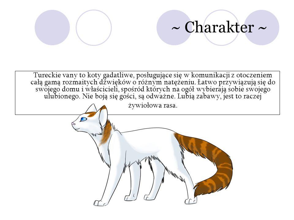 ~ Charakter ~ Tureckie vany to koty gadatliwe, posługujące się w komunikacji z otoczeniem całą gamą rozmaitych dźwięków o różnym natężeniu. Łatwo przy