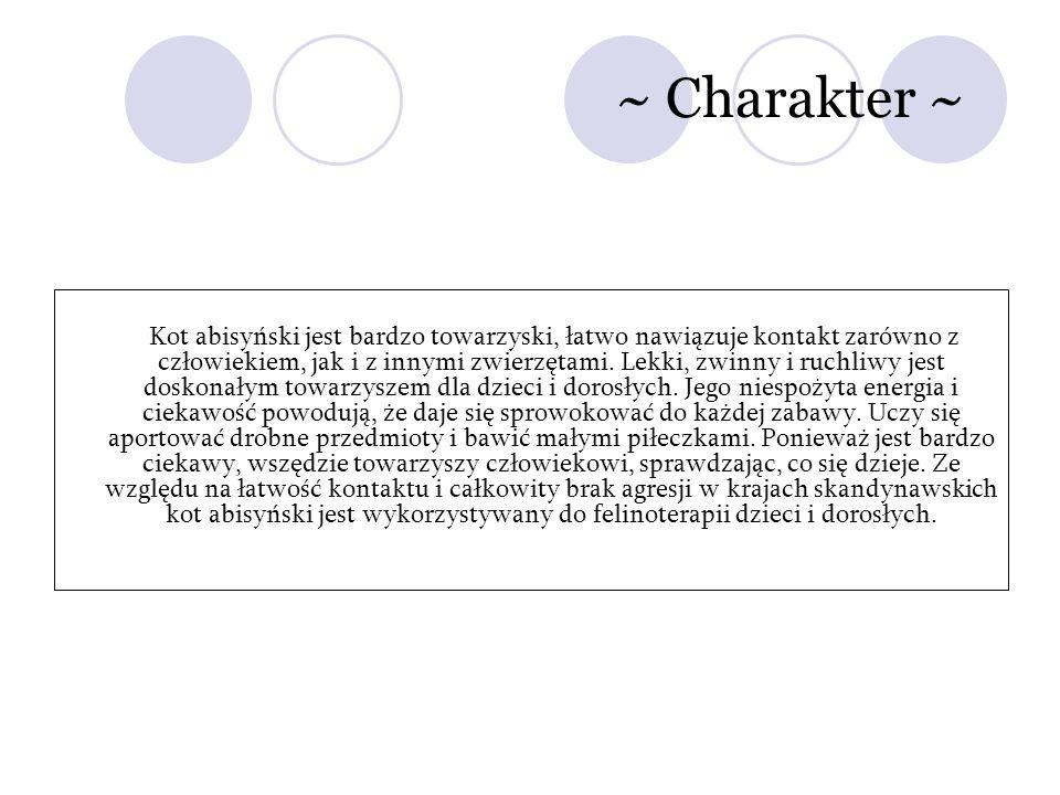 ~ Charakter ~ Kot abisyński jest bardzo towarzyski, łatwo nawiązuje kontakt zarówno z człowiekiem, jak i z innymi zwierzętami. Lekki, zwinny i ruchliw