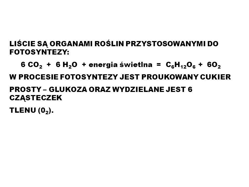 LIŚCIE SĄ ORGANAMI ROŚLIN PRZYSTOSOWANYMI DO FOTOSYNTEZY: 6 CO 2 + 6 H 2 O + energia świetlna = C 6 H 12 O 6 + 6O 2 W PROCESIE FOTOSYNTEZY JEST PROUKO