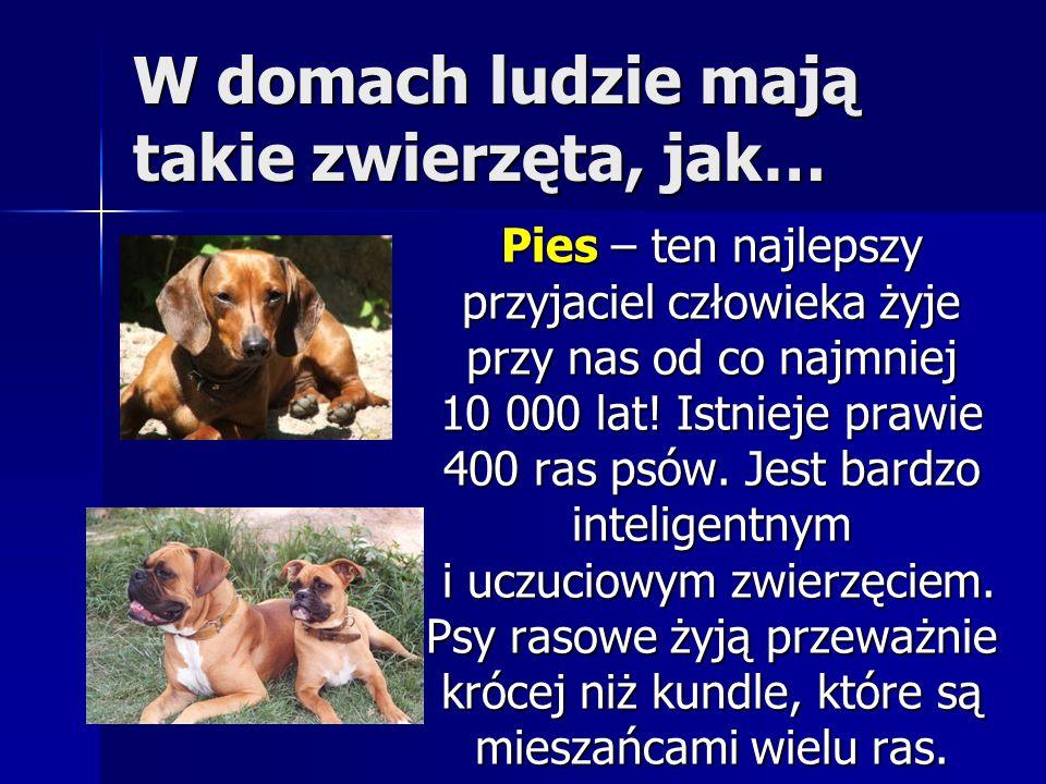 W domach ludzie mają takie zwierzęta, jak… Pies – ten najlepszy przyjaciel człowieka żyje przy nas od co najmniej 10 000 lat! Istnieje prawie 400 ras