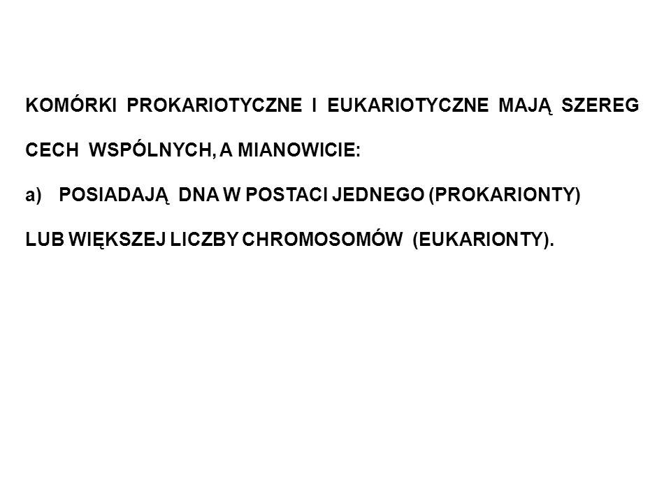 KOMÓRKI PROKARIOTYCZNE I EUKARIOTYCZNE MAJĄ SZEREG CECH WSPÓLNYCH, A MIANOWICIE: a)POSIADAJĄ DNA W POSTACI JEDNEGO (PROKARIONTY) LUB WIĘKSZEJ LICZBY C