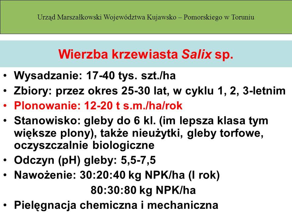 Wierzba krzewiasta Salix sp. Wysadzanie: 17-40 tys. szt./ha Zbiory: przez okres 25-30 lat, w cyklu 1, 2, 3-letnim Plonowanie: 12-20 t s.m./ha/rok Stan