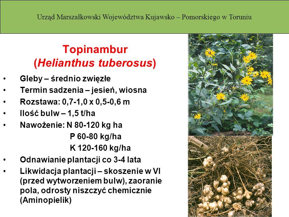 Topinambur (Helianthus tuberosus) Gleby – średnio zwięzłe Termin sadzenia – jesień, wiosna Rozstawa: 0,7-1,0 x 0,5-0,6 m Ilość bulw – 1,5 t/ha Nawożen