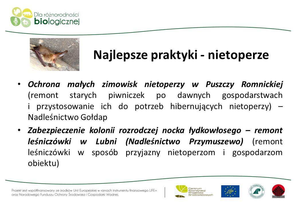 Najlepsze praktyki - nietoperze Ochrona małych zimowisk nietoperzy w Puszczy Romnickiej (remont starych piwniczek po dawnych gospodarstwach i przystos