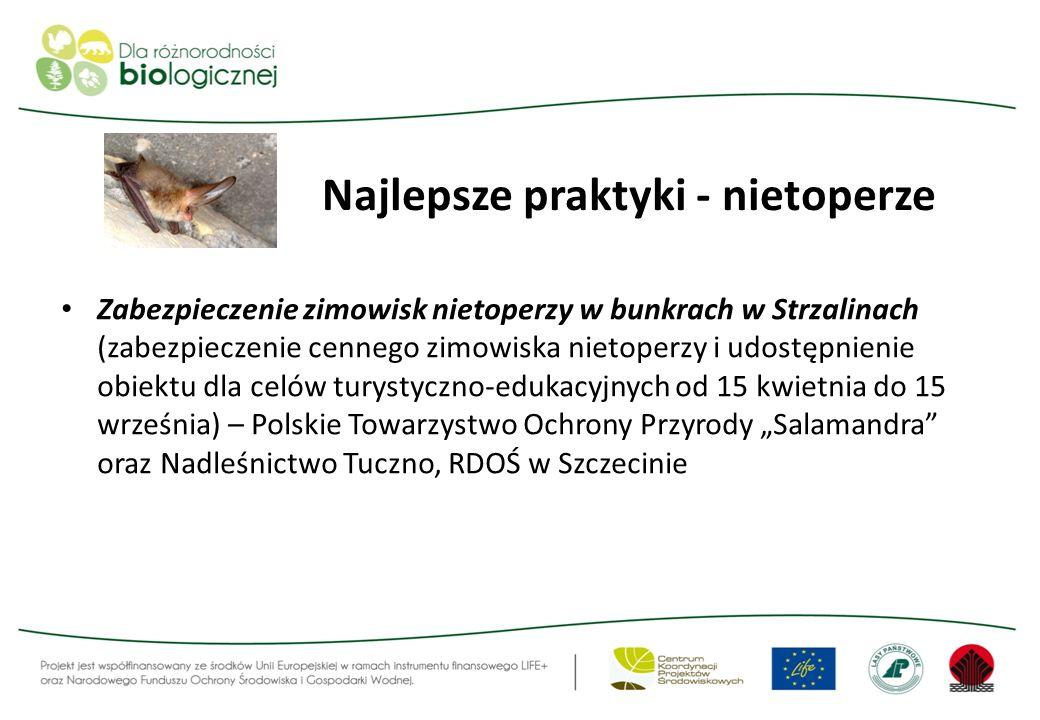 Najlepsze praktyki - nietoperze Zabezpieczenie zimowisk nietoperzy w bunkrach w Strzalinach (zabezpieczenie cennego zimowiska nietoperzy i udostępnien