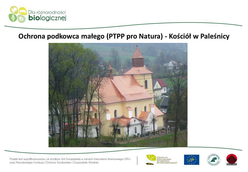Ochrona podkowca małego (PTPP pro Natura) - Kościół w Paleśnicy