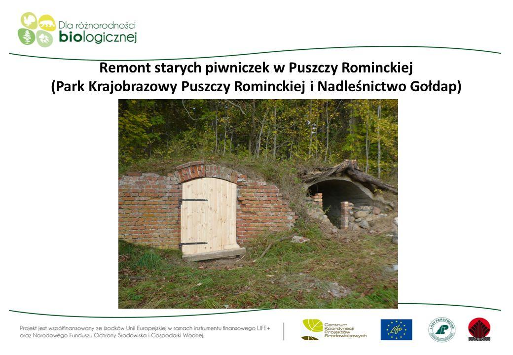 Remont starych piwniczek w Puszczy Rominckiej (Park Krajobrazowy Puszczy Rominckiej i Nadleśnictwo Gołdap)