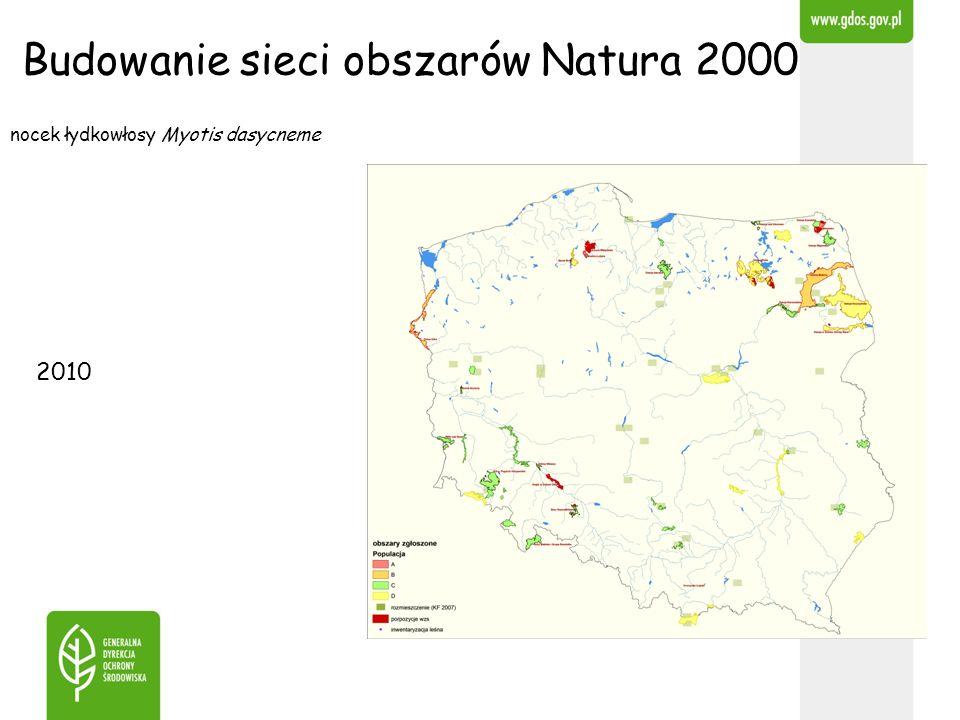nocek łydkowłosy Myotis dasycneme Budowanie sieci obszarów Natura 2000 2010