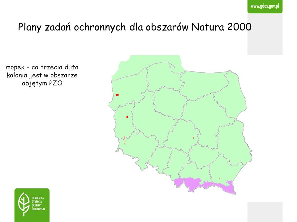 Plany zadań ochronnych dla obszarów Natura 2000 mopek – co trzecia duża kolonia jest w obszarze objętym PZO