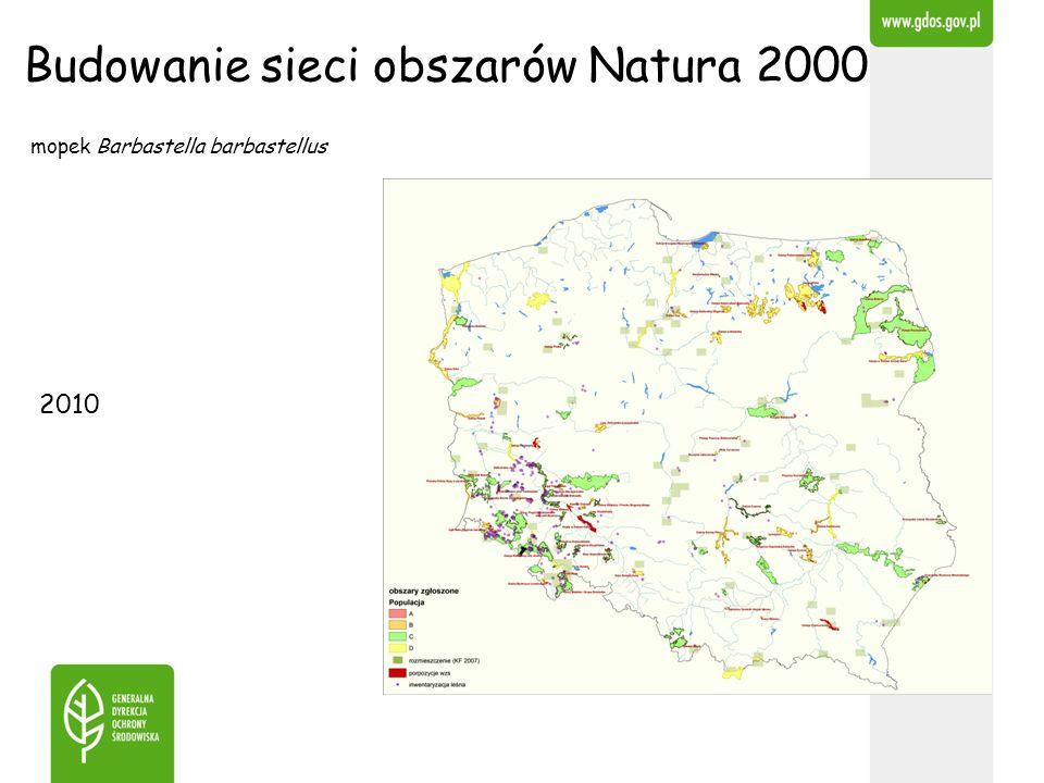 Budowanie sieci obszarów Natura 2000 mopek Barbastella barbastellus 2010