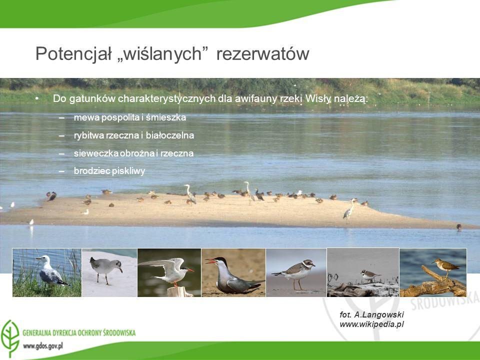 www.gdos.gov.pl fot. A.Langowski www.wikipedia.pl Potencjał wiślanych rezerwatów Do gatunków charakterystycznych dla awifauny rzeki Wisły należą: –mew