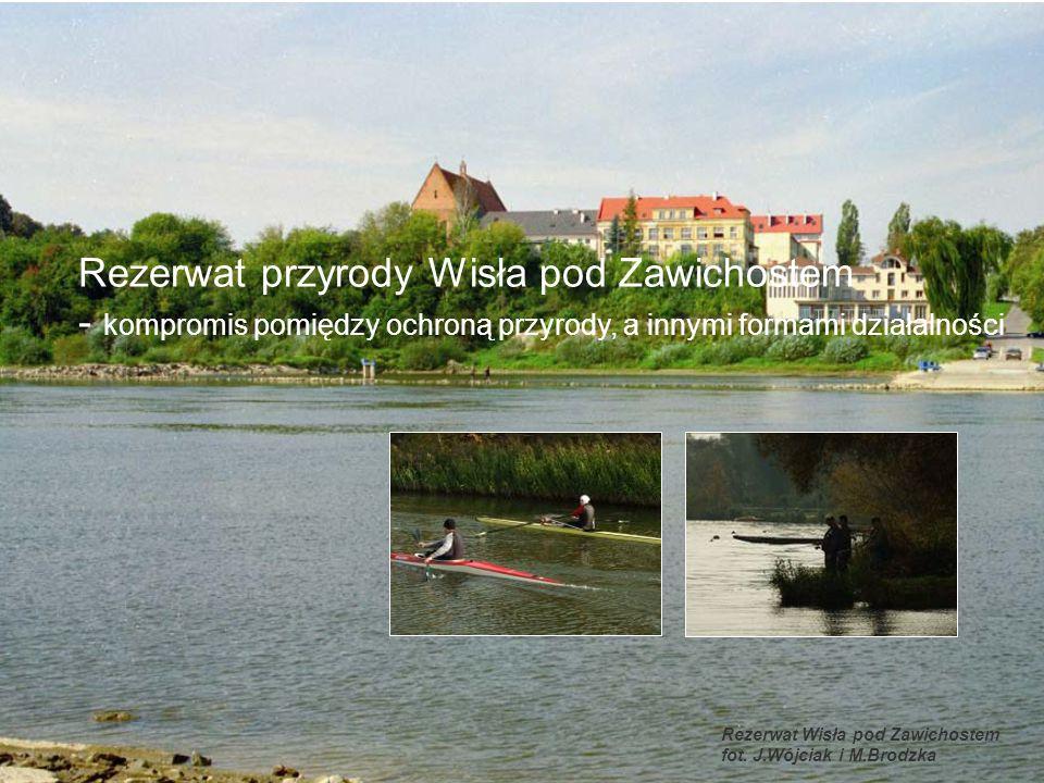 Rezerwat Wisła pod Zawichostem fot. J.Wójciak i M.Brodzka Rezerwat przyrody Wisła pod Zawichostem - kompromis pomiędzy ochroną przyrody, a innymi form