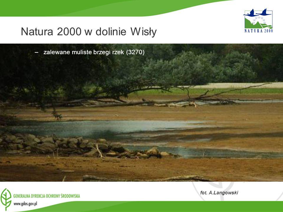 www.gdos.gov.pl Natura 2000 w dolinie Wisły –zalewane muliste brzegi rzek (3270) fot. A.Langowski
