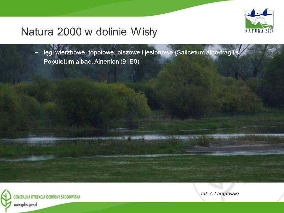 www.gdos.gov.pl Natura 2000 w dolinie Wisły –łęgi wierzbowe, topolowe, olszowe i jesionowe (Salicetum albo-fragilis, Populetum albae, Alnenion (91E0)