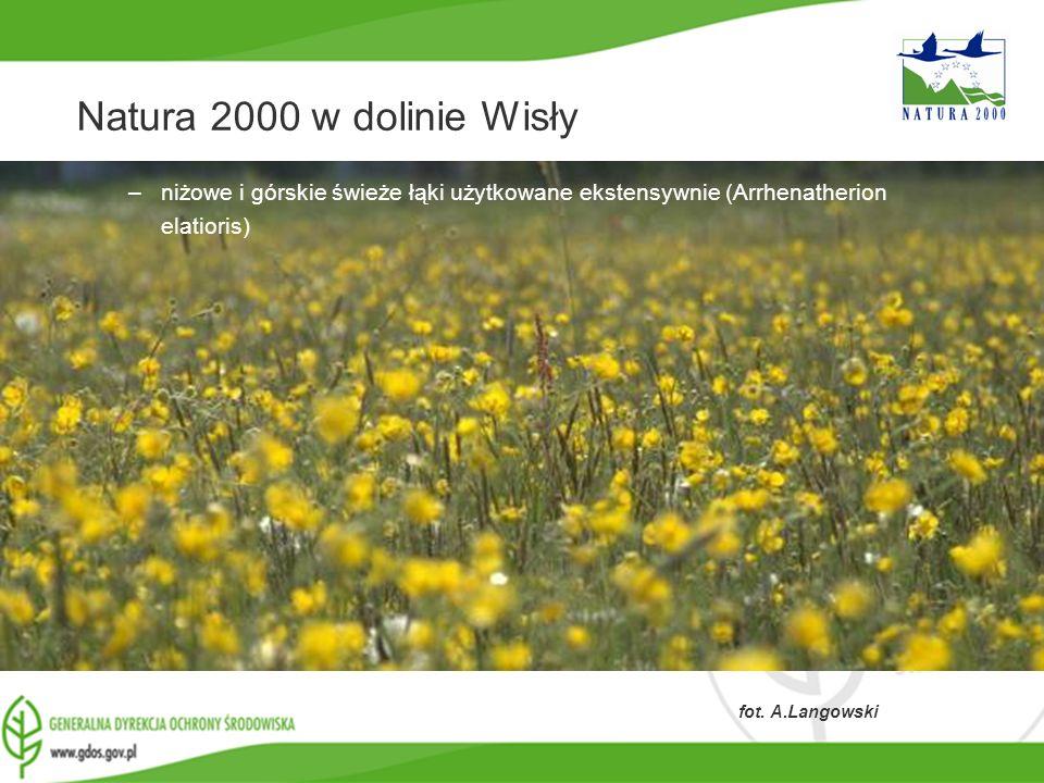 www.gdos.gov.pl Natura 2000 w dolinie Wisły –niżowe i górskie świeże łąki użytkowane ekstensywnie (Arrhenatherion elatioris) fot. A.Langowski