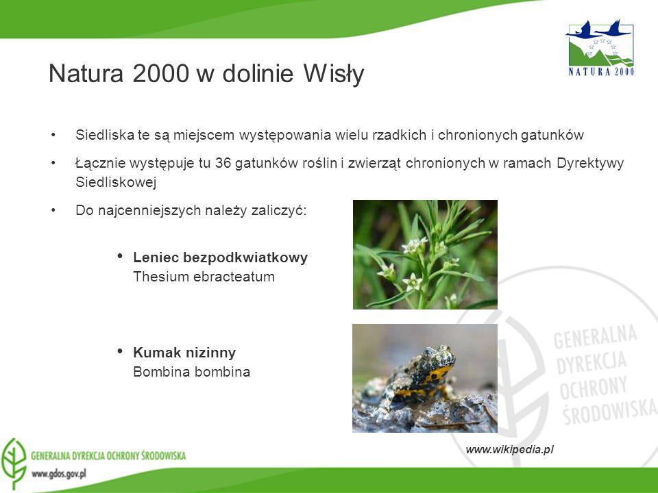 www.gdos.gov.pl Natura 2000 w dolinie Wisły Siedliska te są miejscem występowania wielu rzadkich i chronionych gatunków Łącznie występuje tu 36 gatunk