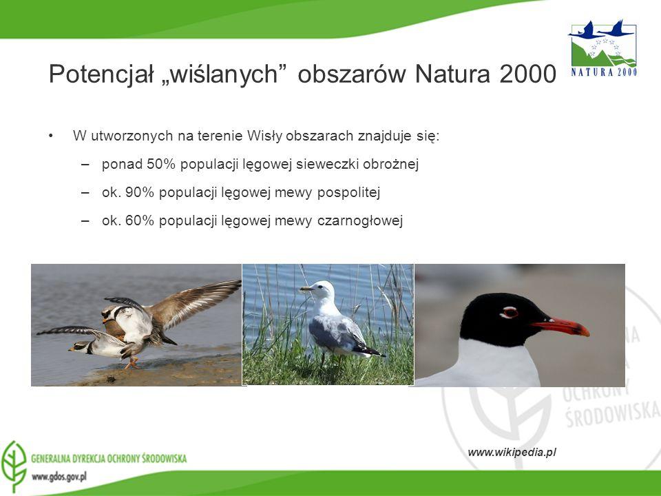 www.gdos.gov.pl Potencjał wiślanych obszarów Natura 2000 W utworzonych na terenie Wisły obszarach znajduje się: –ponad 50% populacji lęgowej sieweczki