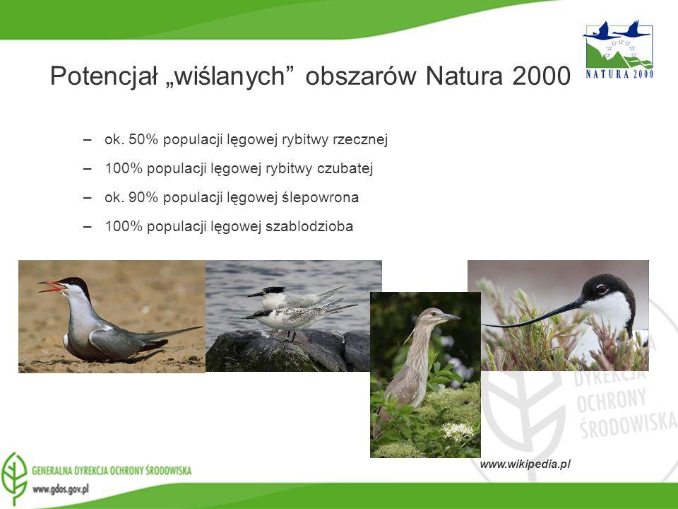 www.gdos.gov.pl Potencjał wiślanych obszarów Natura 2000 –ok. 50% populacji lęgowej rybitwy rzecznej –100% populacji lęgowej rybitwy czubatej –ok. 90%