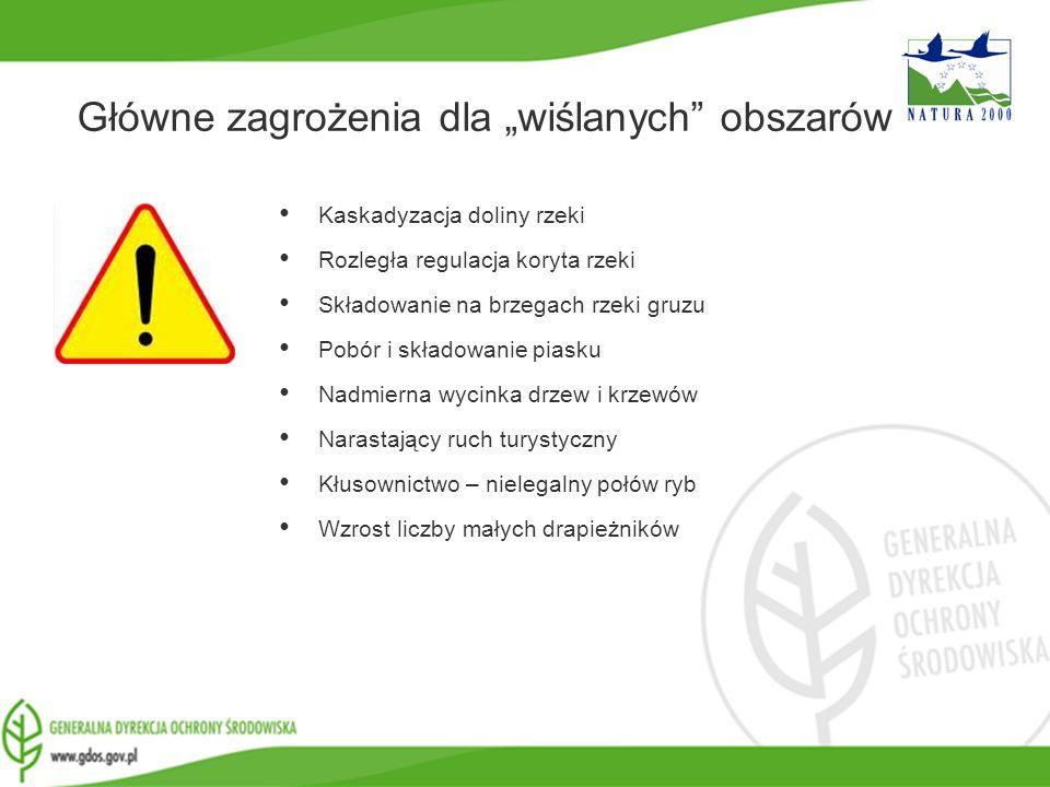www.gdos.gov.pl Główne zagrożenia dla wiślanych obszarów Kaskadyzacja doliny rzeki Rozległa regulacja koryta rzeki Składowanie na brzegach rzeki gruzu