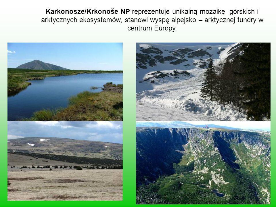 Karkonosze/Krkonoše NP reprezentuje unikalną mozaikę górskich i arktycznych ekosystemów, stanowi wyspę alpejsko – arktycznej tundry w centrum Europy.