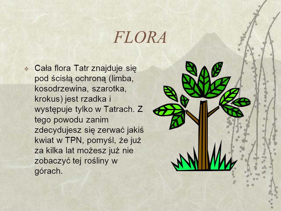 Średnia roczna suma opadów w Tatrach wynosi około 1700 mm