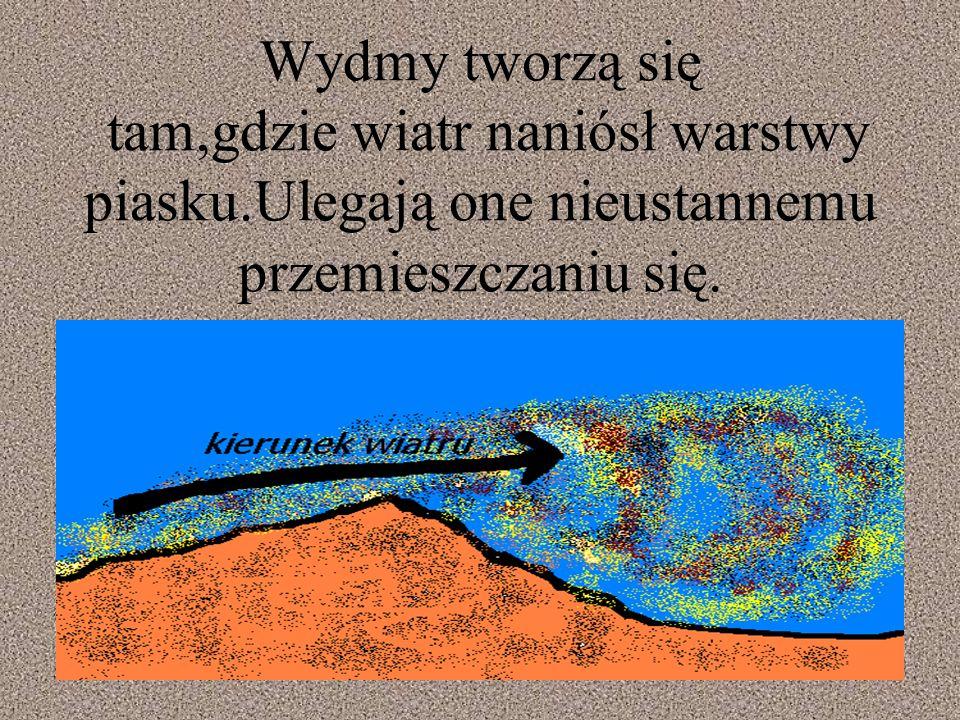 Wydmy tworzą się tam,gdzie wiatr naniósł warstwy piasku.Ulegają one nieustannemu przemieszczaniu się.