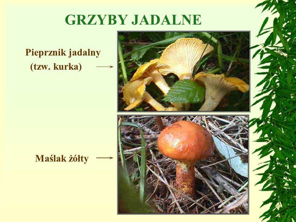 GRZYBY JADALNETRUJĄCE PODZIAŁ GRZYBÓW Niektóre grzyby są jadalne, inne bardzo niebezpieczne, bo silne trujące. Nie wolno pod żadnym pozorem zbierać i