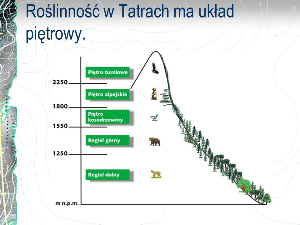 Rośliny chronione w Tatrach: dziewięćsił bezłodygowy ostróżka tatrzańska