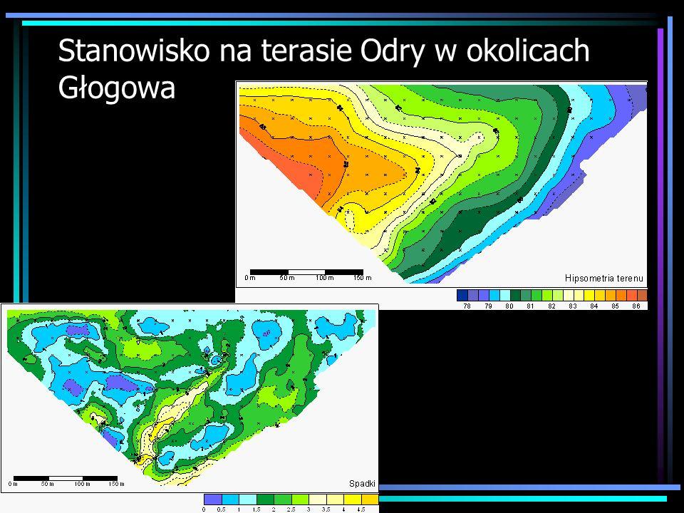 Stanowisko na terasie Odry w okolicach Głogowa