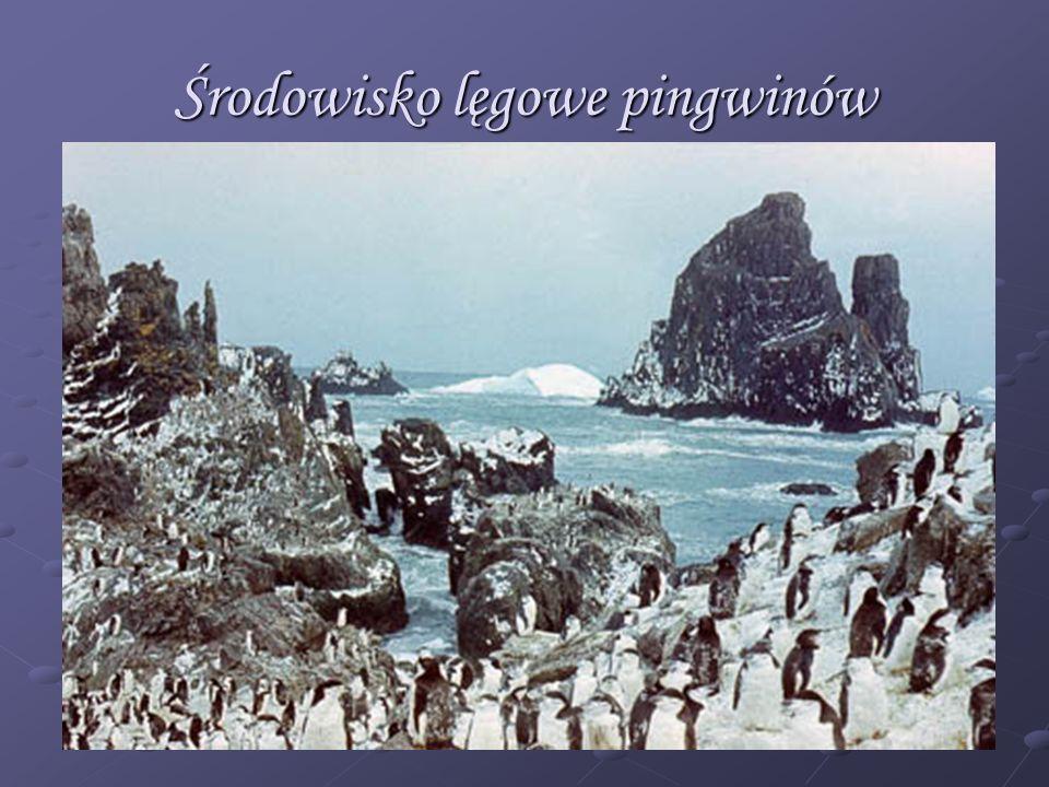 Środowisko lęgowe pingwinów