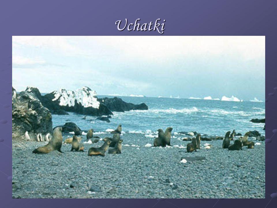 Uchatki