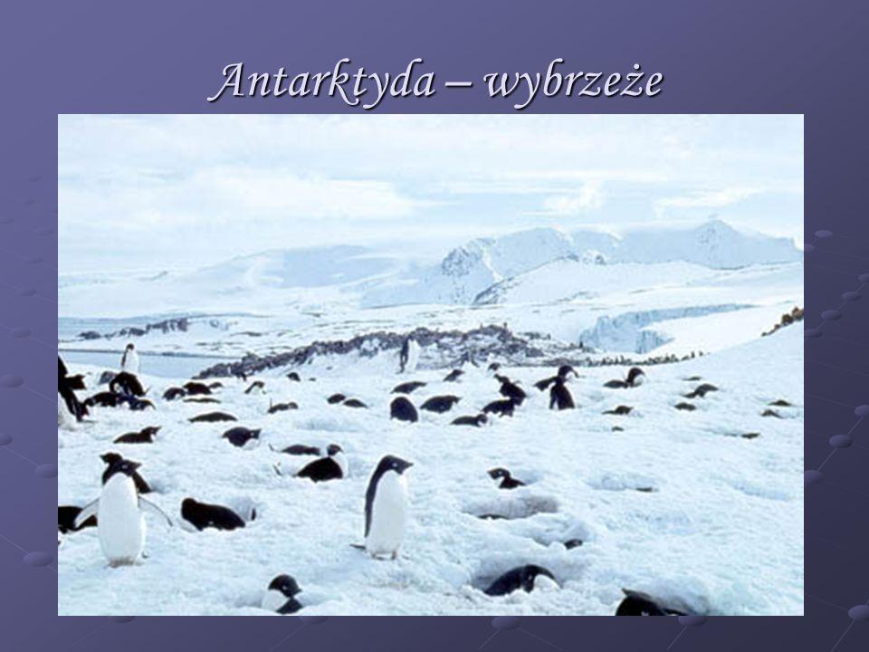 Antarktyda – wybrzeże