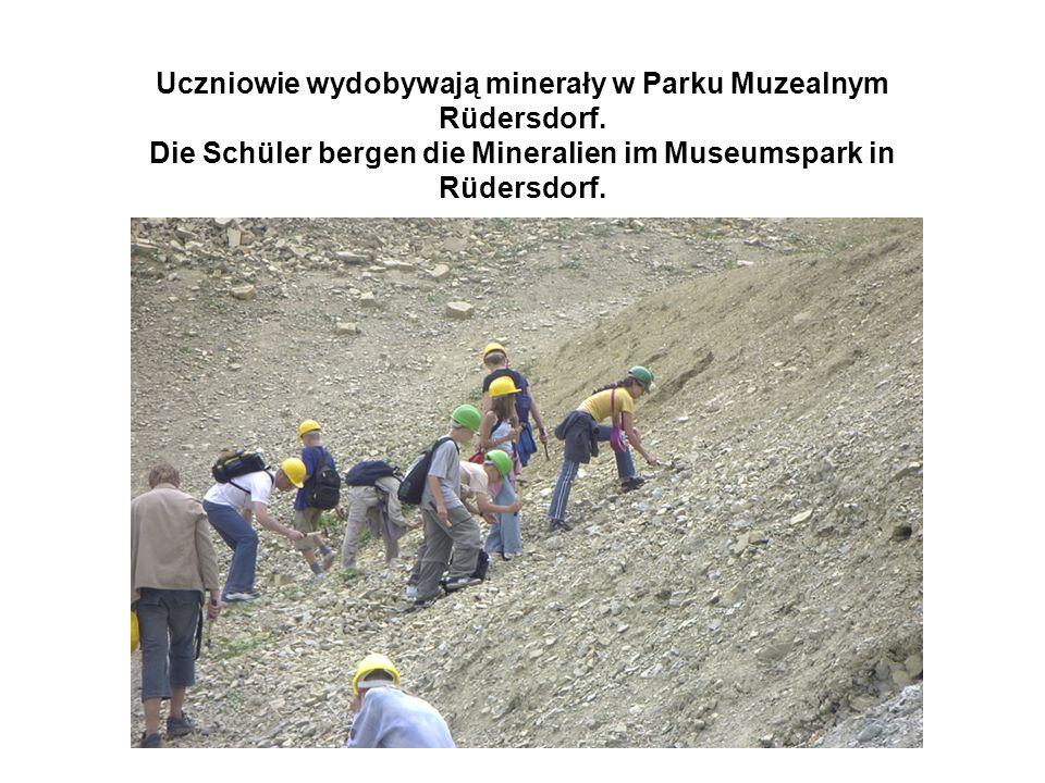 Uczniowie wydobywają minerały w Parku Muzealnym Rüdersdorf.