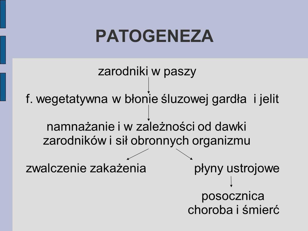 PATOGENEZA zarodniki w paszy f. wegetatywna w błonie śluzowej gardła i jelit namnażanie i w zależności od dawki zarodników i sił obronnych organizmu z