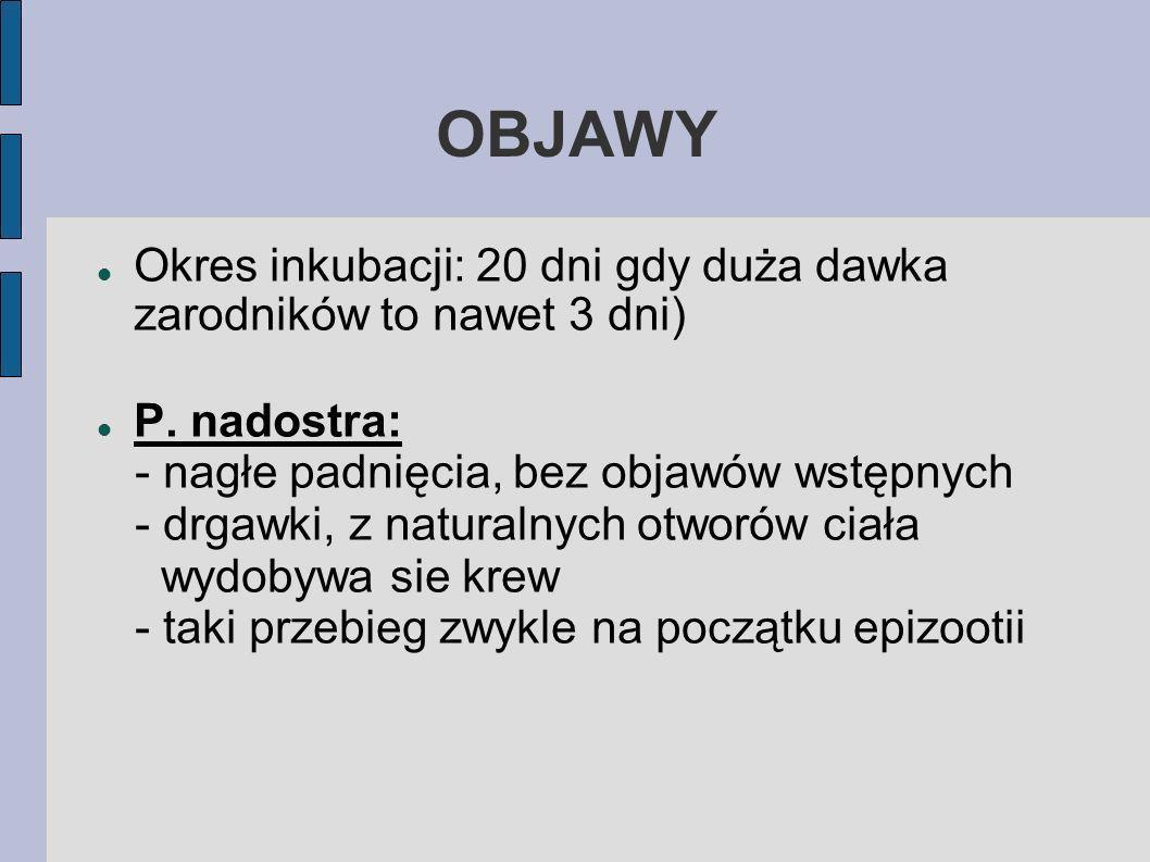 OBJAWY Okres inkubacji: 20 dni gdy duża dawka zarodników to nawet 3 dni) P. nadostra: - nagłe padnięcia, bez objawów wstępnych - drgawki, z naturalnyc