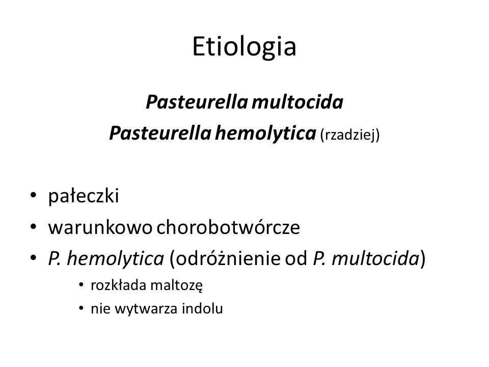 Etiologia Pasteurella multocida Pasteurella hemolytica (rzadziej) pałeczki warunkowo chorobotwórcze P. hemolytica (odróżnienie od P. multocida) rozkła