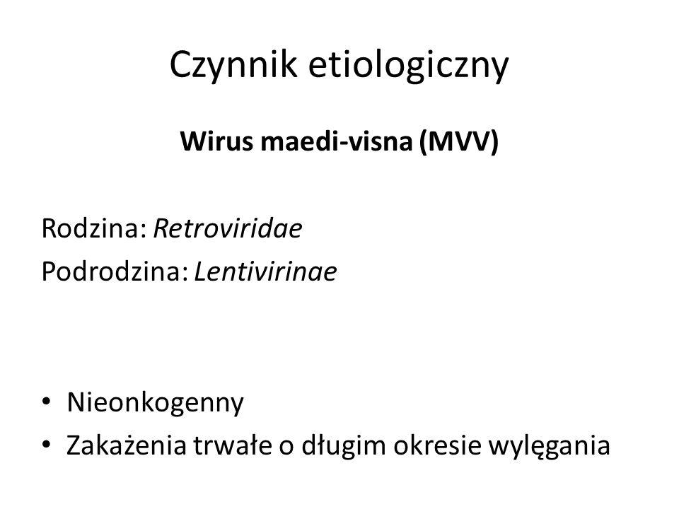 Czynnik etiologiczny Wirus maedi-visna (MVV) Rodzina: Retroviridae Podrodzina: Lentivirinae Nieonkogenny Zakażenia trwałe o długim okresie wylęgania