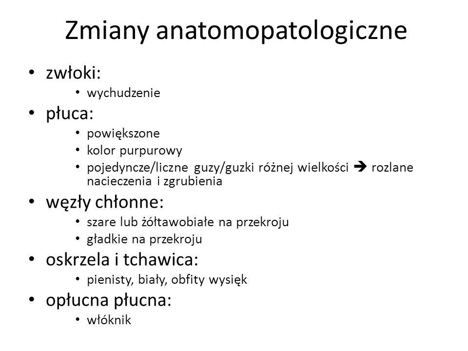 Zmiany anatomopatologiczne zwłoki: wychudzenie płuca: powiększone kolor purpurowy pojedyncze/liczne guzy/guzki różnej wielkości rozlane nacieczenia i
