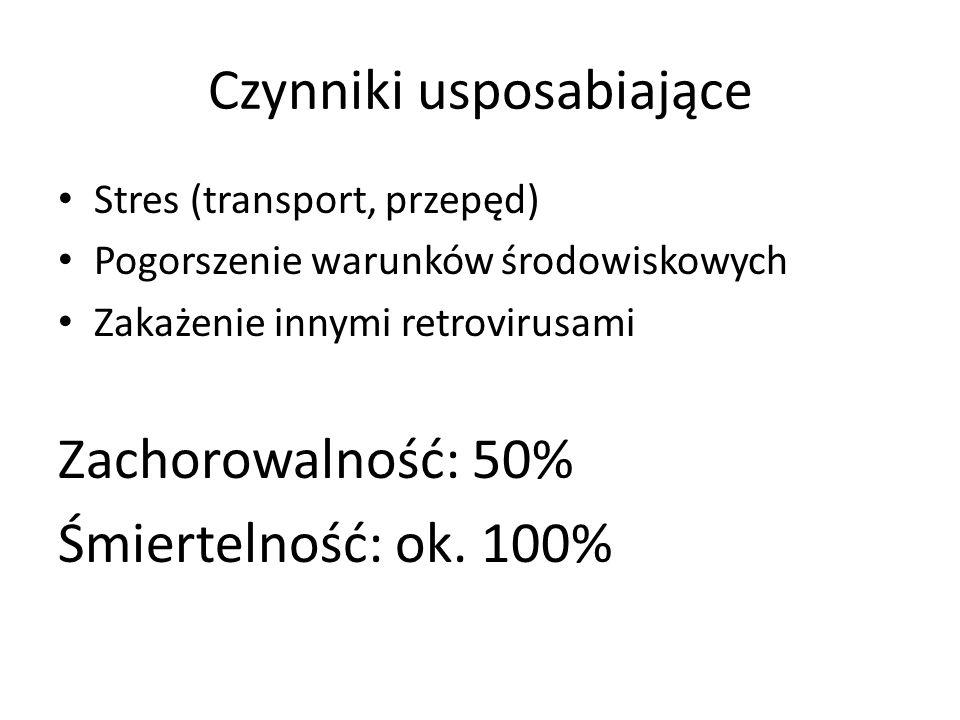 Czynniki usposabiające Stres (transport, przepęd) Pogorszenie warunków środowiskowych Zakażenie innymi retrovirusami Zachorowalność: 50% Śmiertelność: