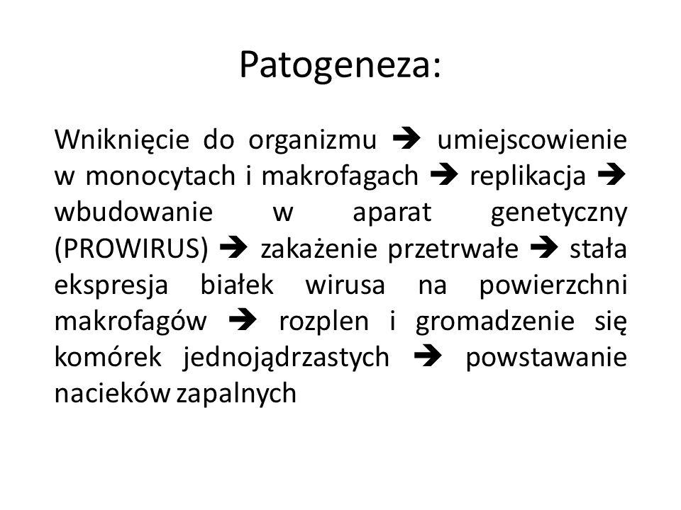 Patogeneza: Wniknięcie do organizmu umiejscowienie w monocytach i makrofagach replikacja wbudowanie w aparat genetyczny (PROWIRUS) zakażenie przetrwał