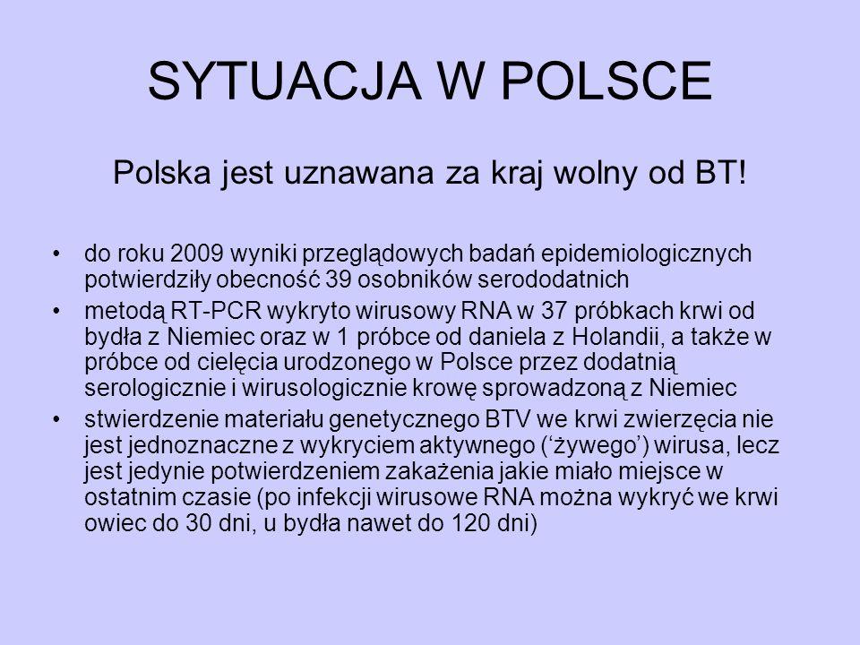 SYTUACJA W POLSCE Polska jest uznawana za kraj wolny od BT! do roku 2009 wyniki przeglądowych badań epidemiologicznych potwierdziły obecność 39 osobni