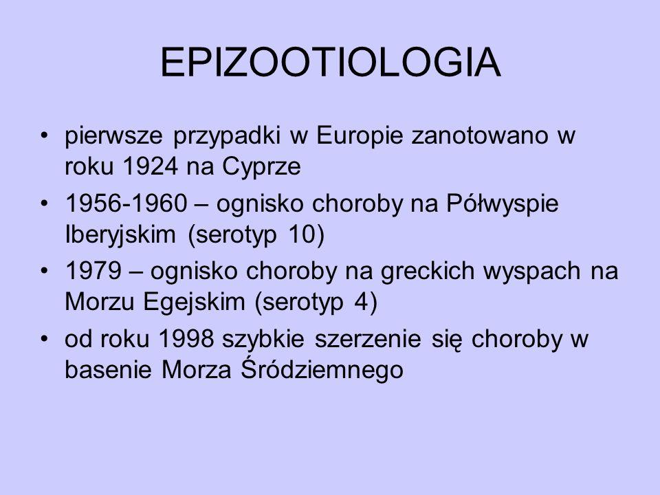 EPIZOOTIOLOGIA pierwsze przypadki w Europie zanotowano w roku 1924 na Cyprze 1956-1960 – ognisko choroby na Półwyspie Iberyjskim (serotyp 10) 1979 – o