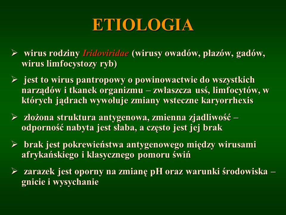ETIOLOGIA wirus rodziny Iridoviridae (wirusy owadów, płazów, gadów, wirus limfocystozy ryb) wirus rodziny Iridoviridae (wirusy owadów, płazów, gadów,