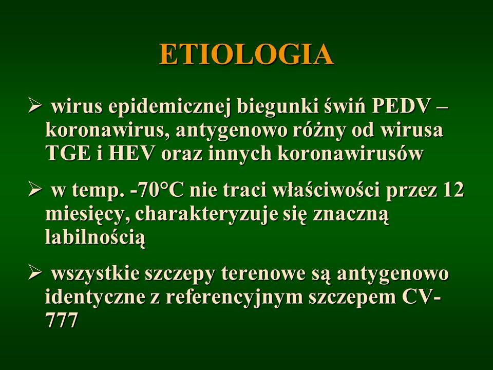 ETIOLOGIA wirus epidemicznej biegunki świń PEDV – koronawirus, antygenowo różny od wirusa TGE i HEV oraz innych koronawirusów wirus epidemicznej biegu
