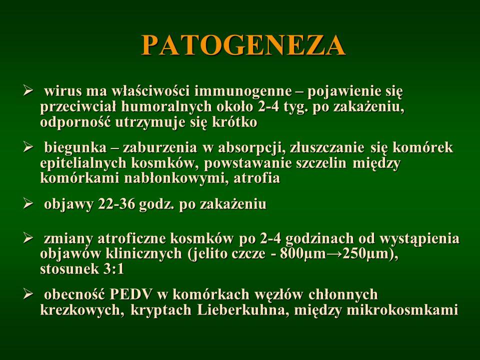 PATOGENEZA wirus ma właściwości immunogenne – pojawienie się przeciwciał humoralnych około 2-4 tyg. po zakażeniu, odporność utrzymuje się krótko wirus