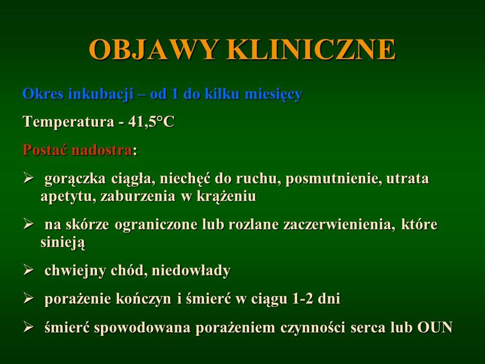 OBJAWY KLINICZNE Okres inkubacji – od 1 do kilku miesięcy Temperatura - 41,5°C Postać nadostra: gorączka ciągła, niechęć do ruchu, posmutnienie, utrat