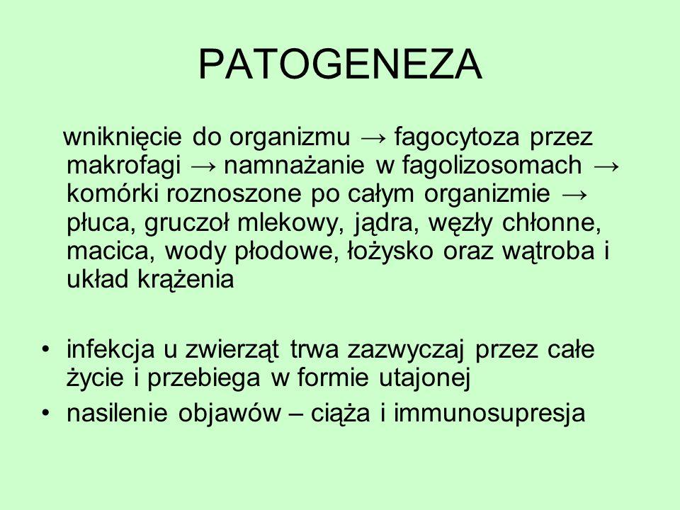 PATOGENEZA wniknięcie do organizmu fagocytoza przez makrofagi namnażanie w fagolizosomach komórki roznoszone po całym organizmie płuca, gruczoł mlekow