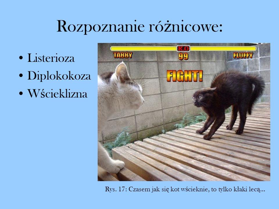 Rozpoznanie ró ż nicowe: Listerioza Diplokokoza W ś cieklizna Rys. 17: Czasem jak si ę kot w ś cieknie, to tylko k ł aki lec ą …